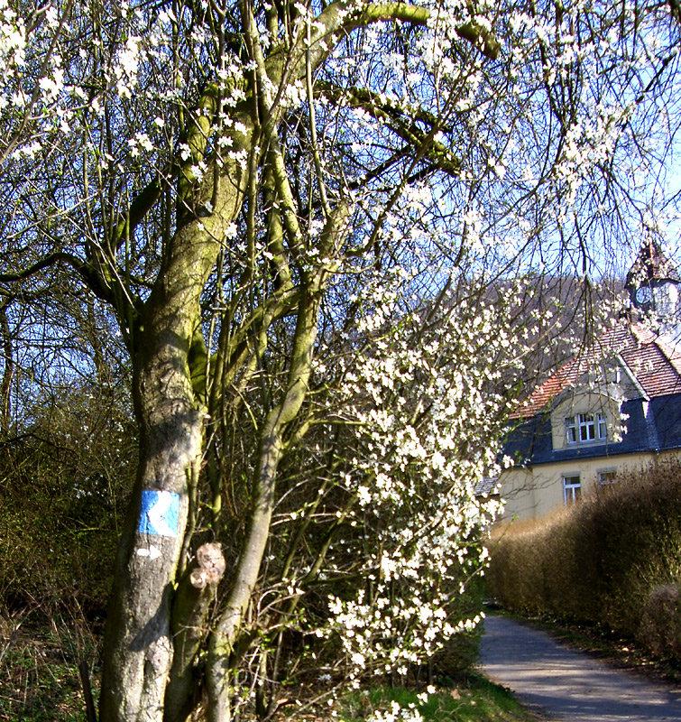 Der Frühling erwartet die Wanderer - © bergleben.de
