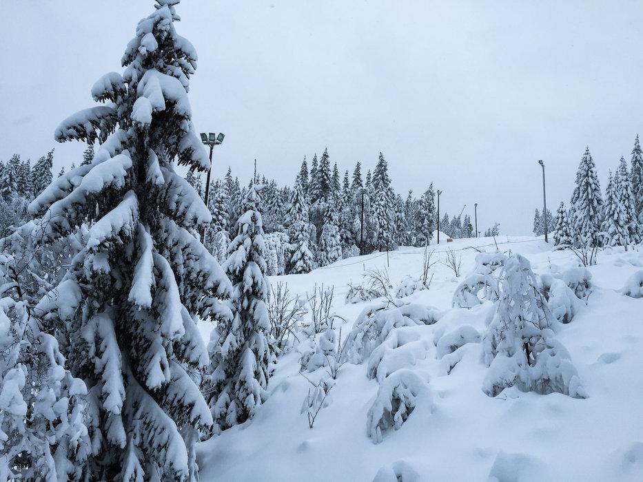En sjelden gang dumper det i Oslo Vinterpark, og da kan man kjøre pudder også i Tryvann! - © Eirik Aspaas