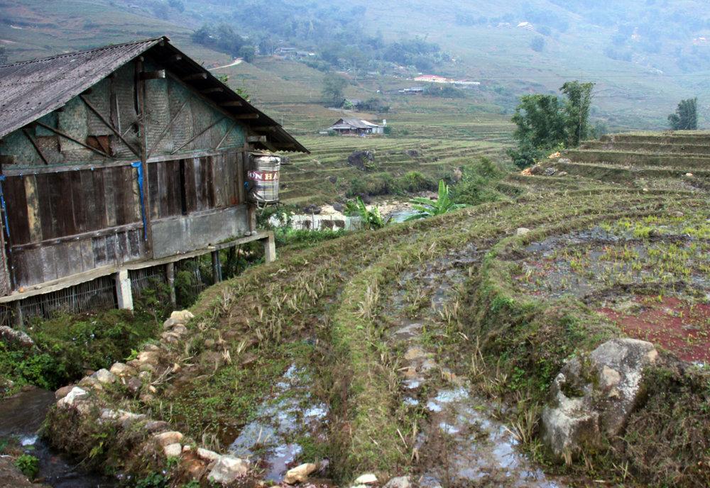 Reisterassen sind einer der Haupteinkommensnachweise der Einwohner hier - © Karsten-T. Raab