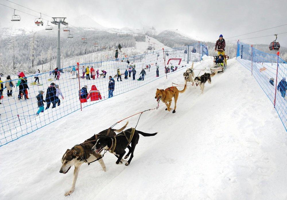 Śnieżne psy 2016 - Tatrzańska Łomnica