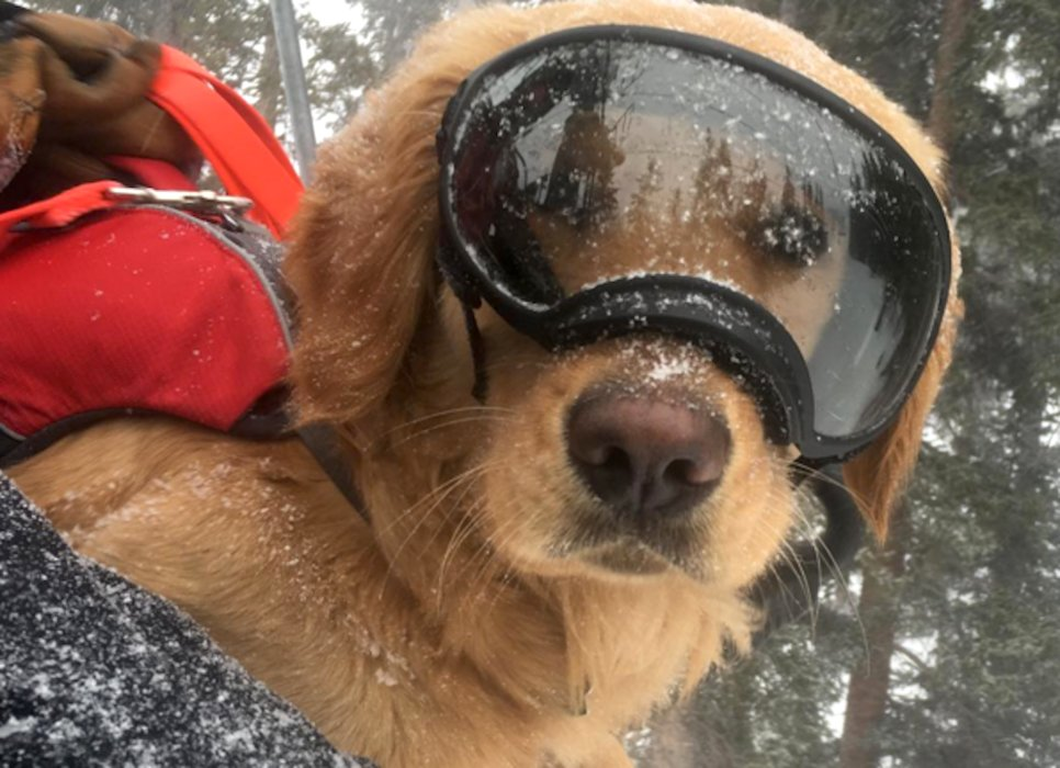 """Mason The Avalanche Dog"" is a popular pup and even has his own Instagram page.  - © Copper Mountain Resort"