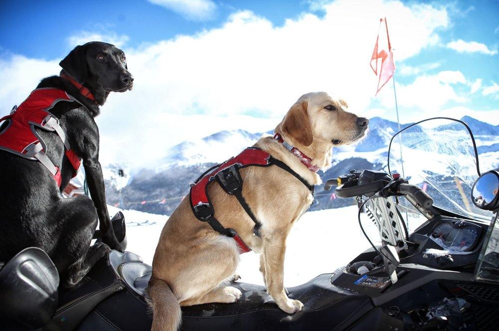 Pup Patrol: poten schieten ter hulp. - © Copper Mountain Resort