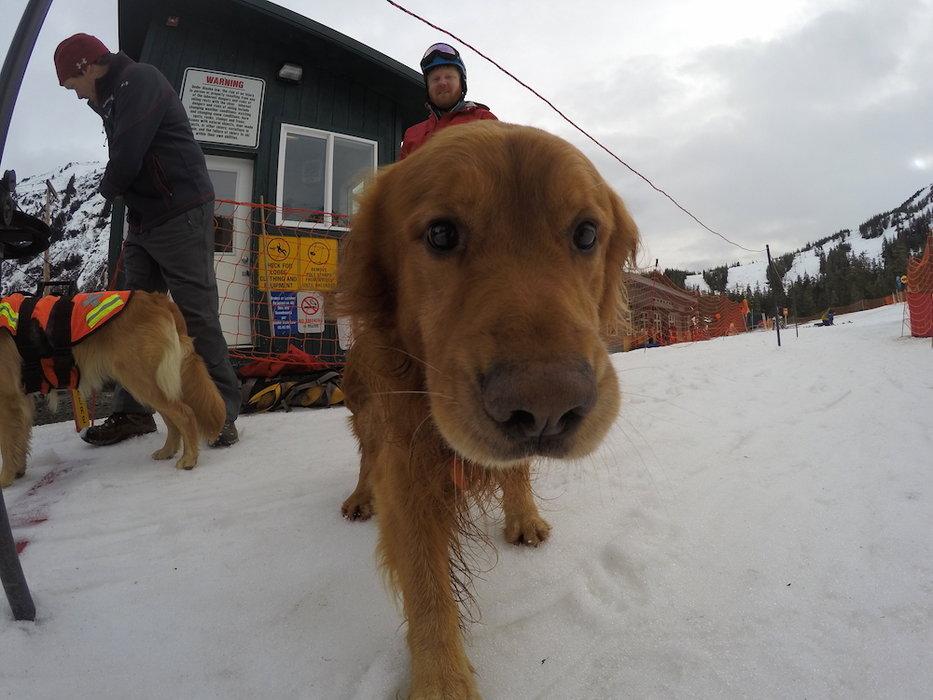 Eagle Crest heeft een fotomodel/lawinehond. - © Eaglecrest Ski Area