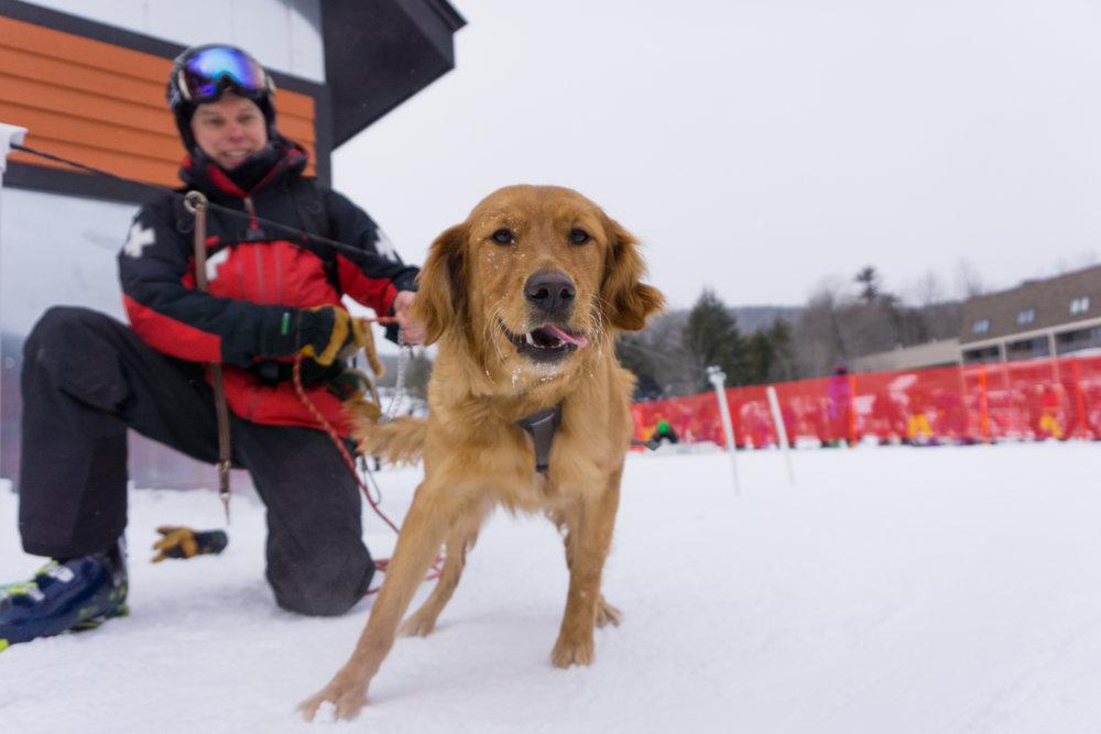Pup Patrol: poten schieten ter hulp. - © Sunday River
