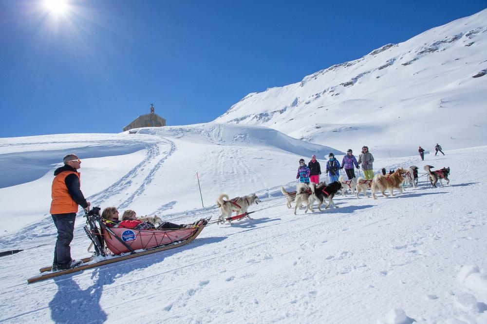 Sortie chiens de traineaux à proximité du Col du Mont Cenis, sur les hauteurs de Val Cenis - © Daniel Durand / Fresh Influence