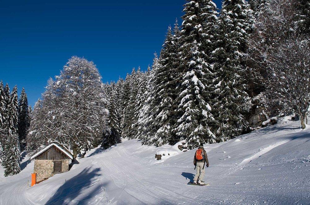 Ski en forêt sur les pistes du domaine du Roc d'Enfer à St Jean d'Aulps - © Office de Tourisme de St Jean d'Aulps