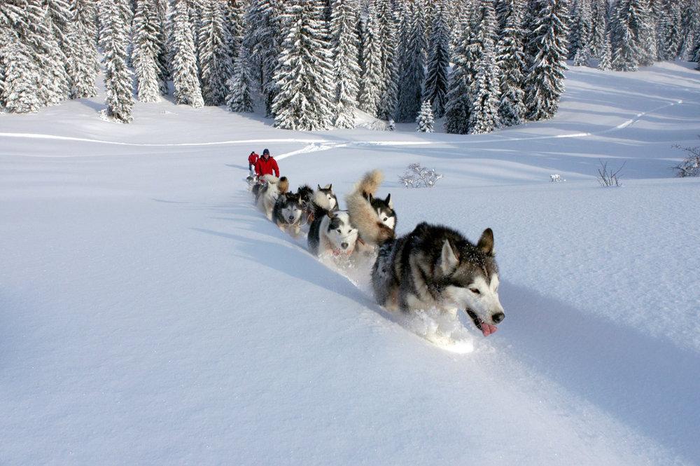 Balade en chiens de traineau dans une ambiance grand nord à proximité des Fourgs - © Les Fourgs Tourisme