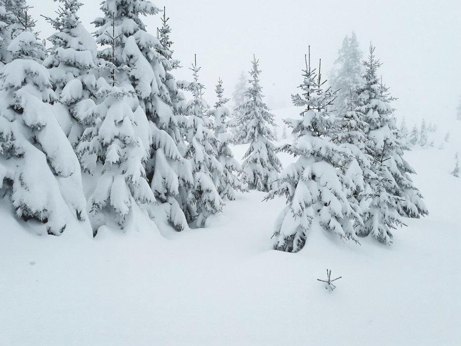 Tief verschneit: Wald in Kitzbühel - © Facebook Kitzbühel