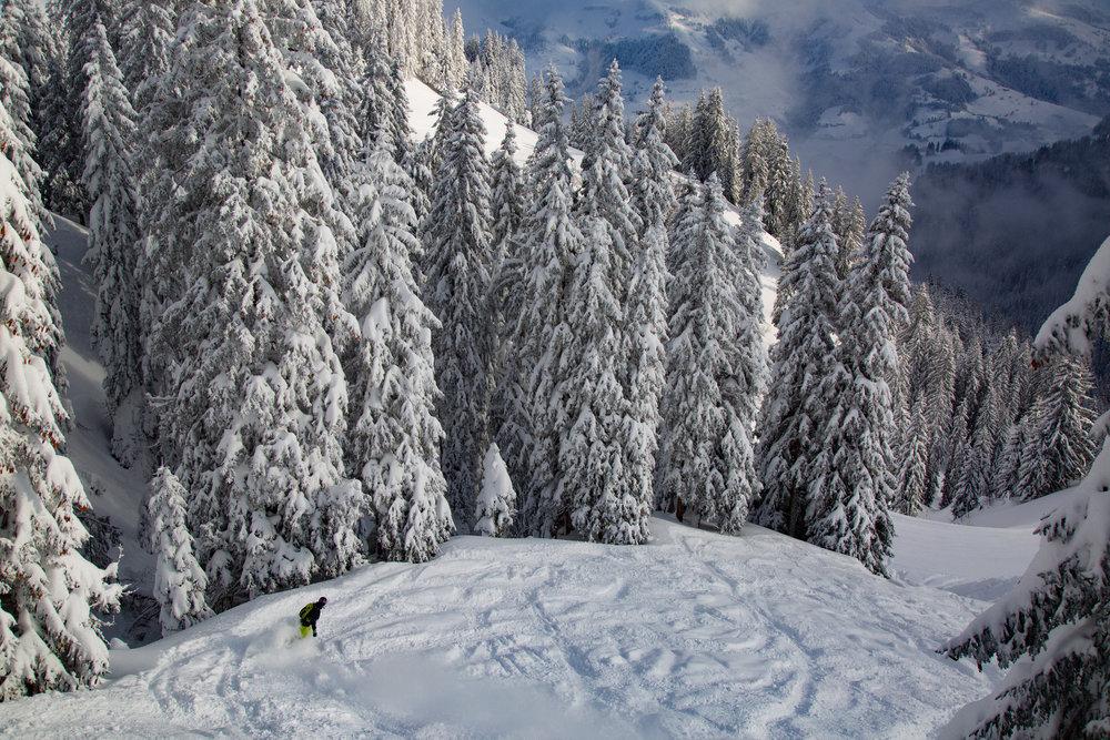 Es geht doch nichts über eine tolle Snowboard-Abfahrt bei Neuschnee - © Skiinfo