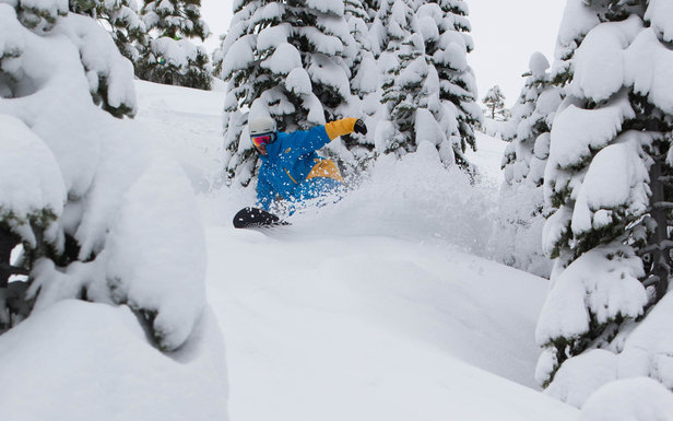 Powder and tree riding at Squaw Valley.
