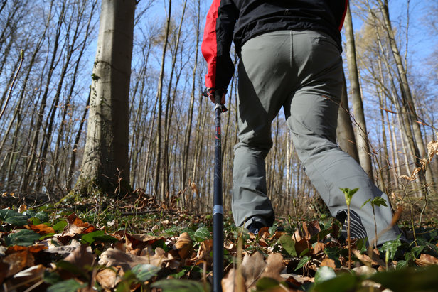 Ab durch den Wald mit dem LEKI Micro Vario Carbon  - © Bergleben