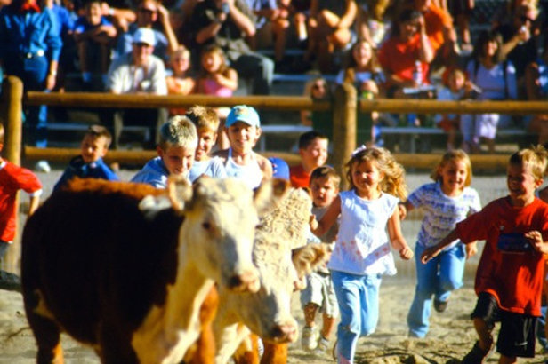 The calf scramble at the weekly Beaver Creek Rodeo is a favorite for kids and their onlooking parents.   - © Beaver Creek Resort