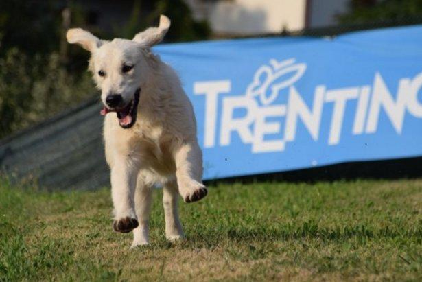 Trentino: in vacanza con il cane!
