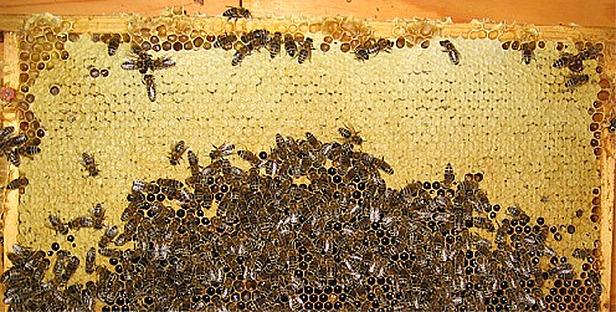 Wilder Kaiser_Bienenwelt
