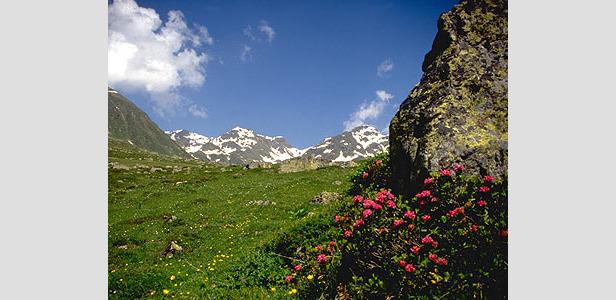 Wipptal - Spring flower meadow