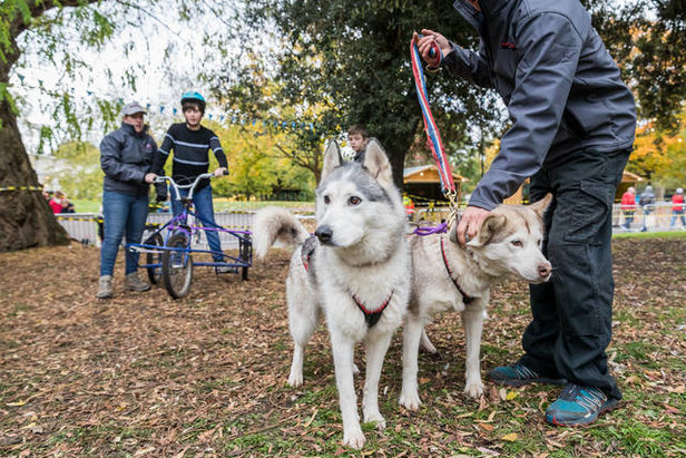 Dog-sledding at the Ski & Snowboard Festival  - © Ski & Snowboard Festival