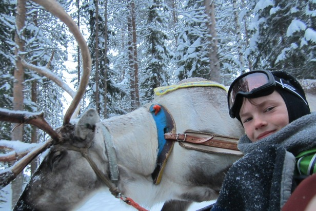 Reindeer safari in Lapland  - © Patrick Thorne