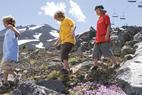 Hike Mt. Bachelor for Wildflower Displays - © Mt. Bachelor Resort