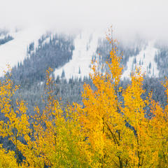 Fall and winter at the same time for Winter Park - ©Brad Torchia