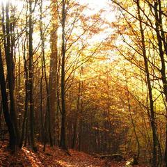 Herbstlich bunt - ©www.pixelio.de