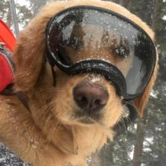 Gallery: Paws to the rescue - ©Copper Mountain Resort