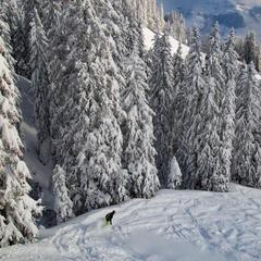 Powder in Kitzbühel 13.1.19